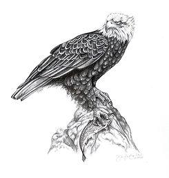 Eagle Drawing Bright.jpg