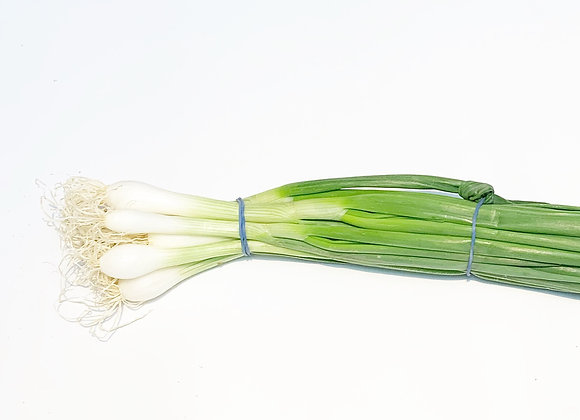 Large Spring Onions