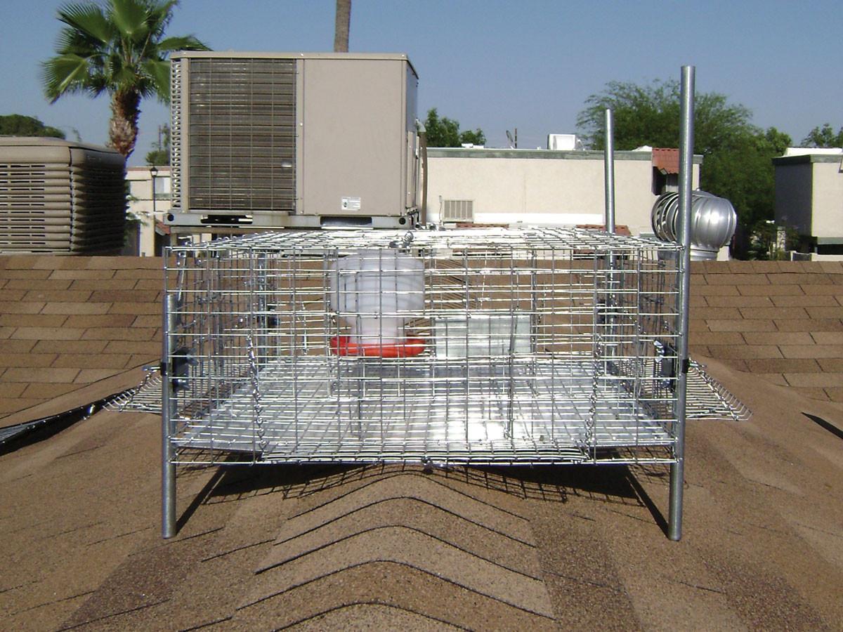 Bird Traps - Example 3