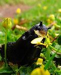 slug_lawn.jpg