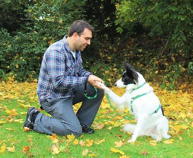 Luke's Dog School dog training