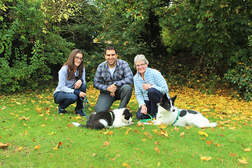 Three Sessions of Dog Training Package