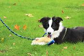 Luke's Dog School puppy training