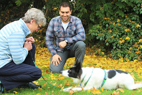 Initial Dog Training Consultation