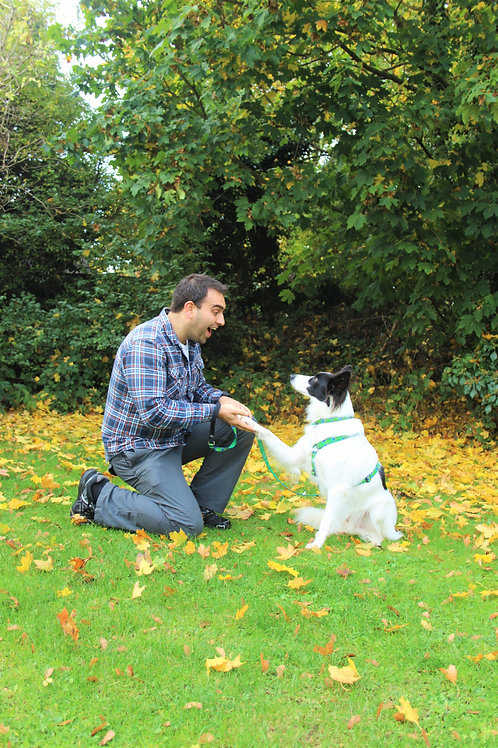 Five Sessions of Initial Dog Training Package