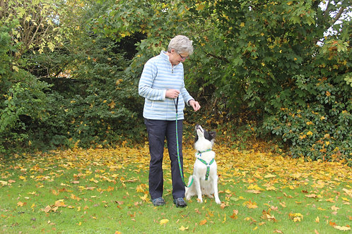 Three Sessions of Initial Dog Training Package