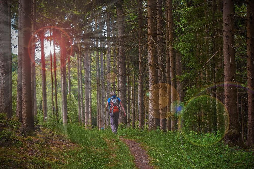 Wanderer läuft durch den Wald
