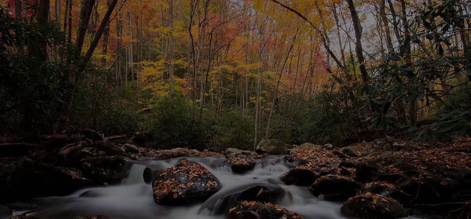Herbstlicher Wald mit Fluß