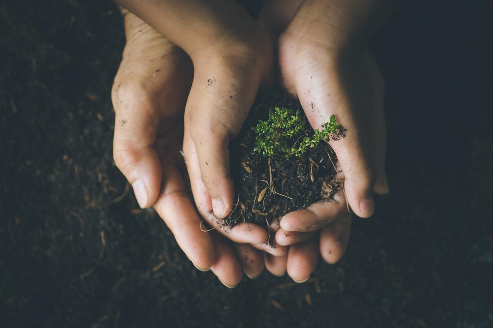 Zwei Paar Hände, die ineinander liegen und eine  Pflanze halten.
