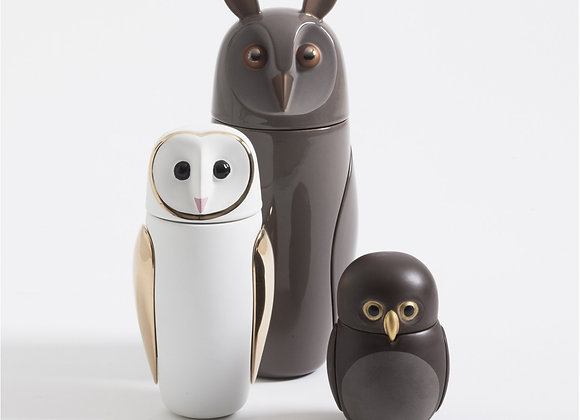 Owls - civetta nana