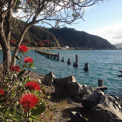 Save Shelly Bay for future generations