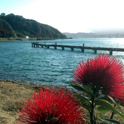 Mau Whenua  |  Save Shelly Bay