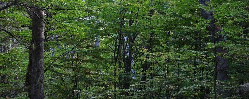 bosque-1300x515.jpg