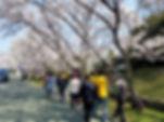 2019花見 (1).jpg