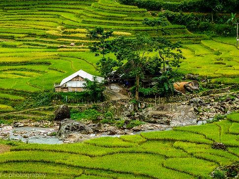 photo d'une mison dans les  riziere au viet nam,photo voyage vietnam