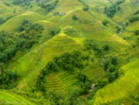 photographie de riziere à sapa au viet nam