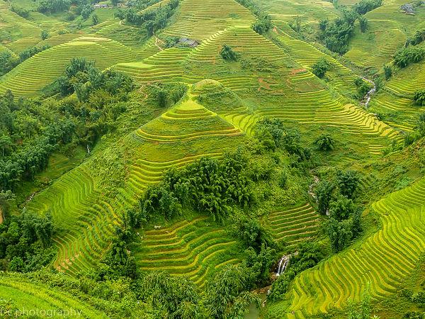 photo riziere viet nam,photo voyage vietnam