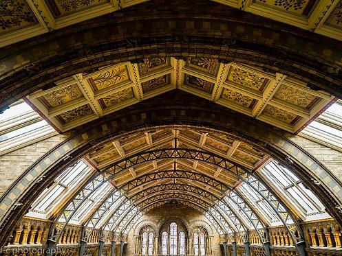vente de photographie dart en édition limitée de musée d'histoire naturelle de Londres