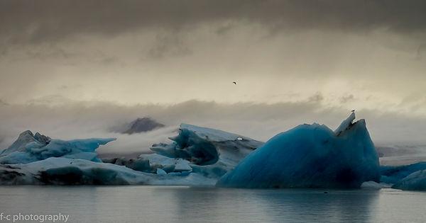 photo de glacier et d'oiseau en islande