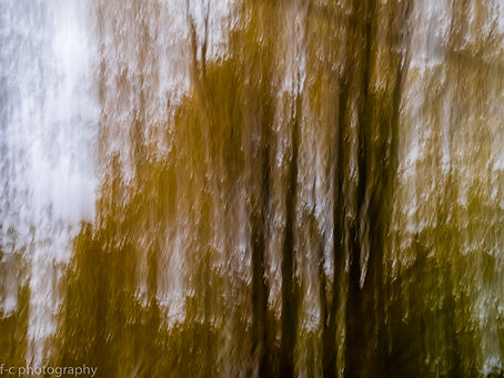 photo foret paysage abstrait