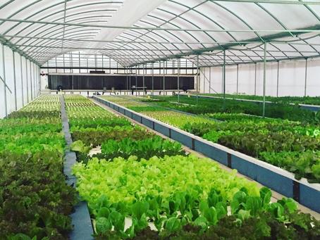 Meet the Grower: Mikey's Garden