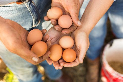Pasture Raised Chicken Eggs