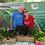 Thumbnail: Mikey's Garden Living Lettuce Bouquet