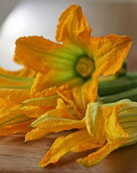 Squash_Blossoms-490.jpg