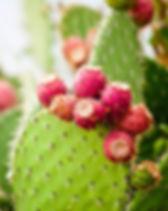 Prickly_Pear_2048x2048.jpg
