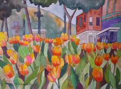 Mall Tulips