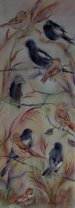 CO Birds
