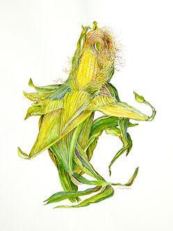 market-behrens-corn.jpg