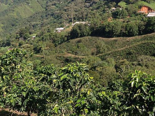 Organic Guatemalan 1 kg