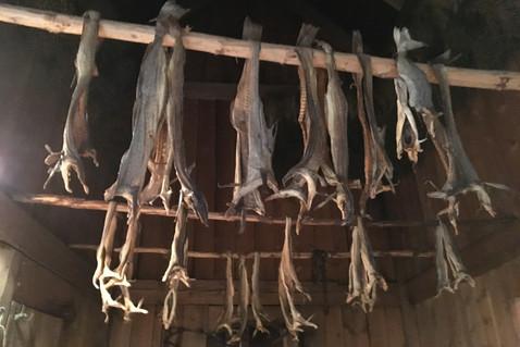Stock fish drying