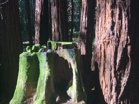 Do You Forest Bathe?-I'll share my favorite spot!