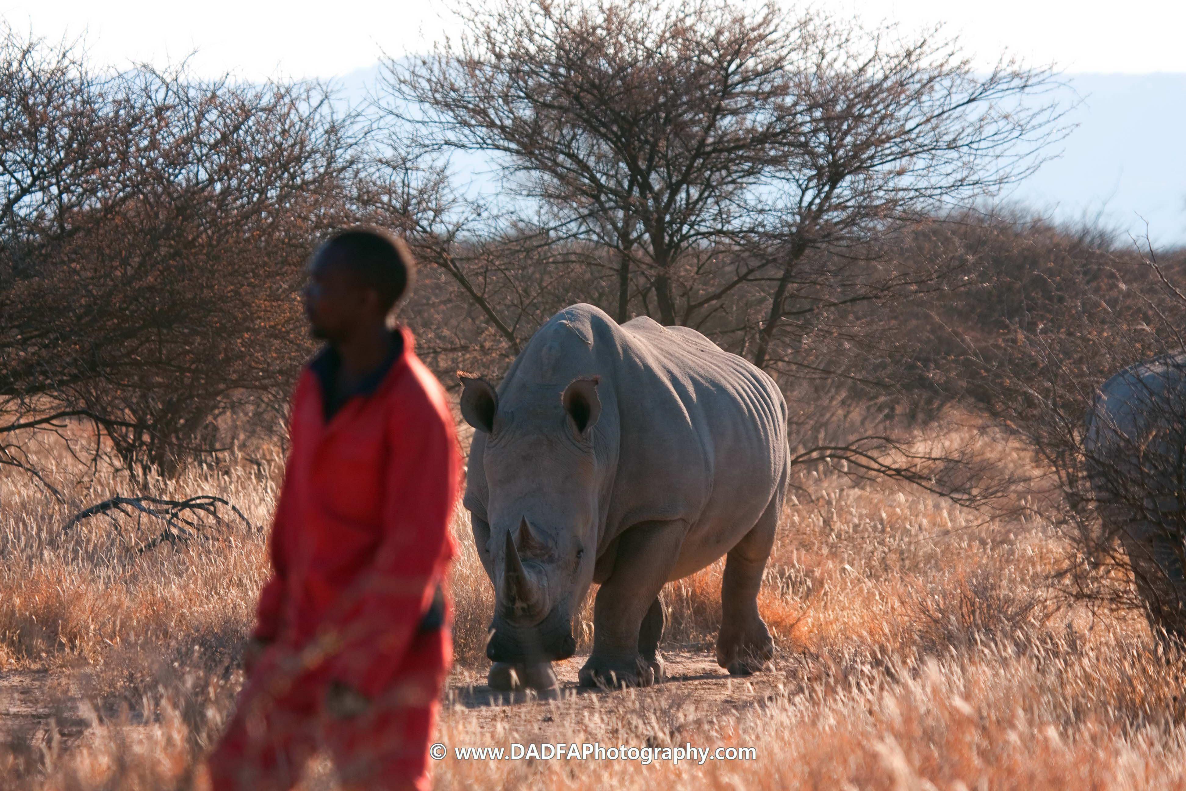 Rhino Under Guard