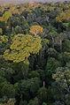 rainforest_canopy_Los_Amigos.jpg