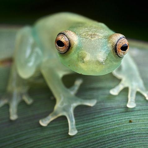frog_1x1_FLP_Paul_Bertner.jpg