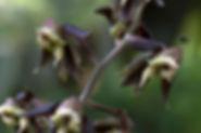 DSC_3857_ed_sm_orchid.jpg