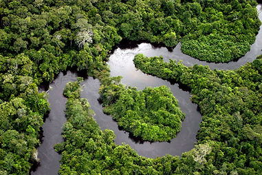 RiverInTheAmazonRainforest_Jlwad_CC.jpg