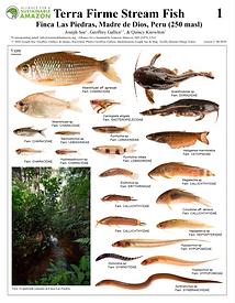 thumbnail_fish field guide v2.PNG