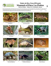 thumbnail_mammals field guide.png