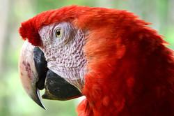 macaw_4x6