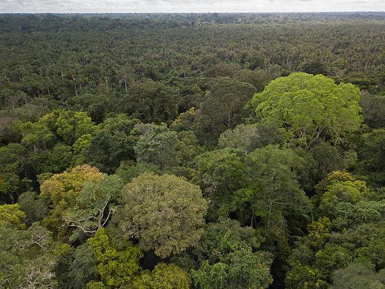 DJI_0166_ed_canopy.jpg