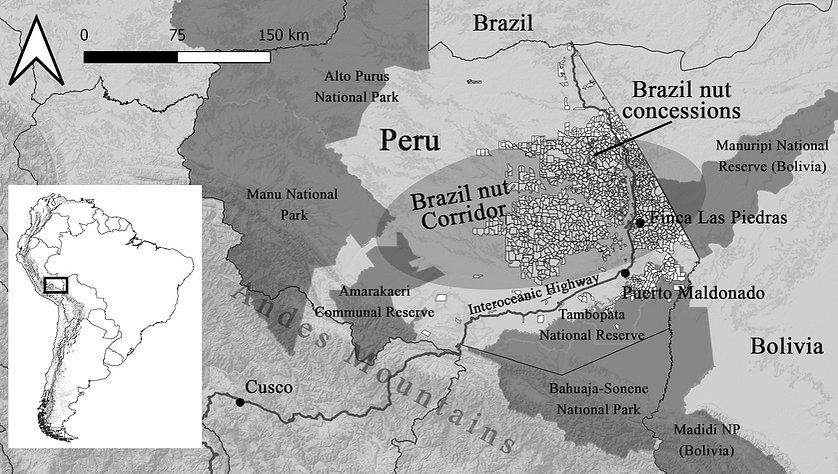 map_Brazil_nut_corridor_ASA_website.jpg