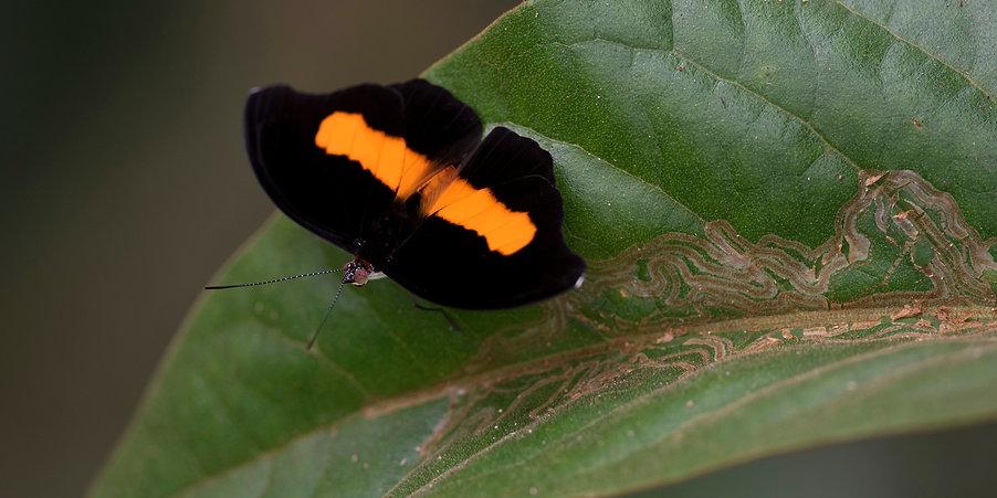 butterfly_Catonephele_1x2_banner.jpg
