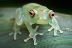 frog_FLP_Paul_Bertner.jpg