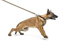 Pets must be on a leash !