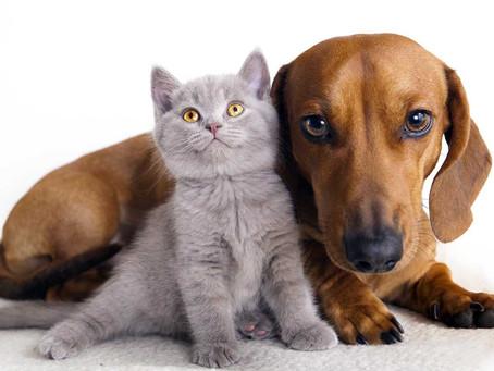 Cani e gatti: alimentazione e benessere