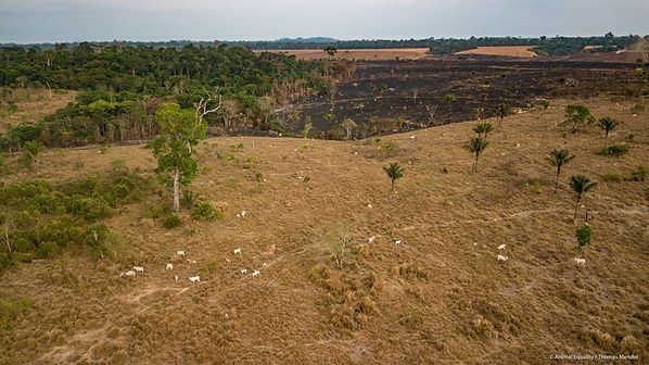 deforestazione legata all'industria alim